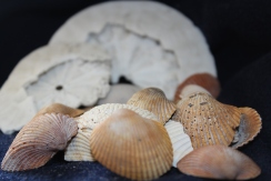A sample of shells